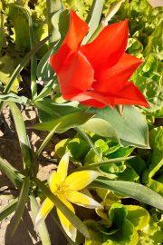 Explorarea mediului – plantele