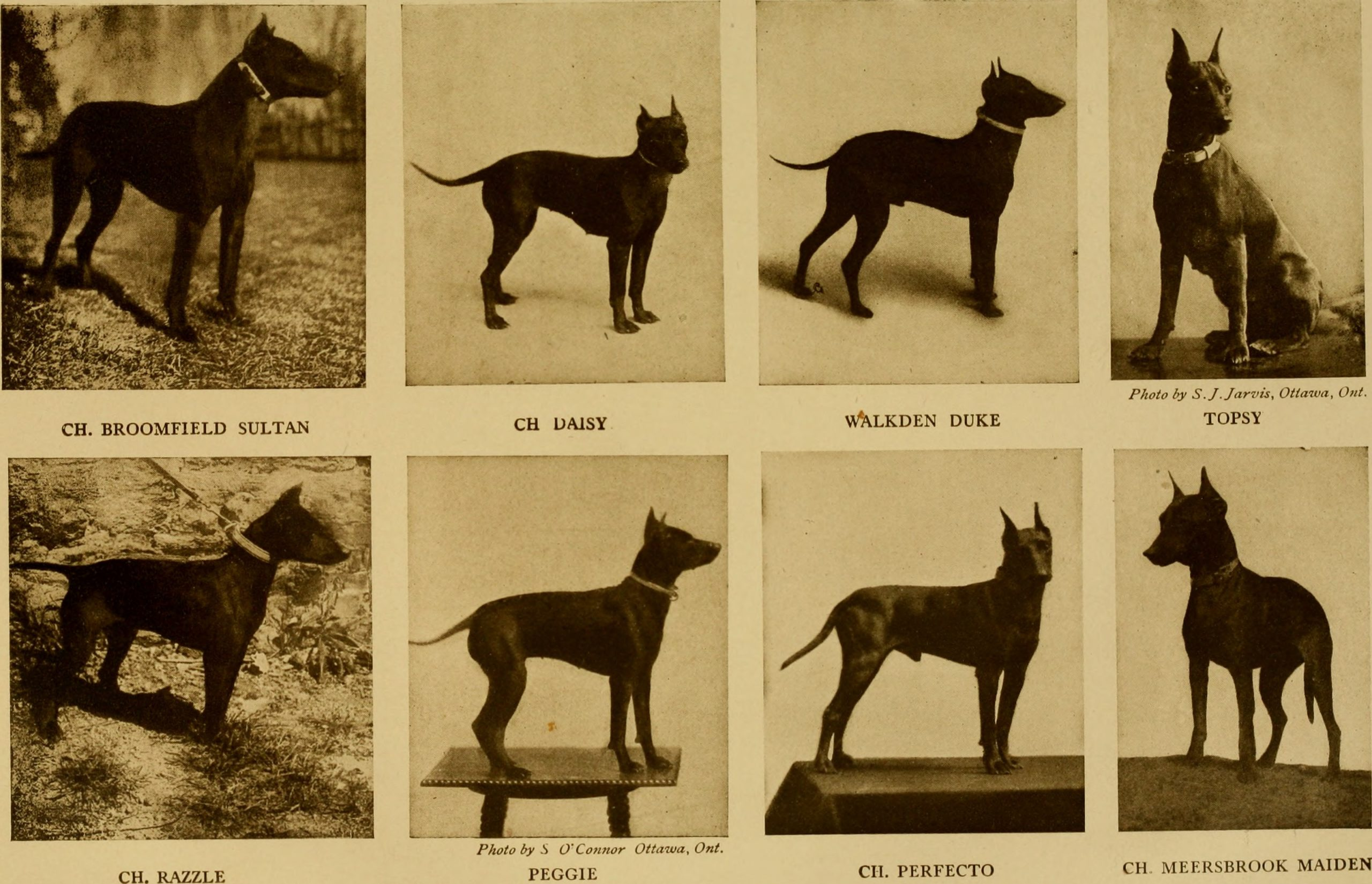 Famous Dogs through history