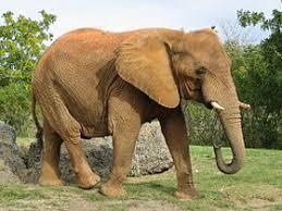 Lumea elefantilor