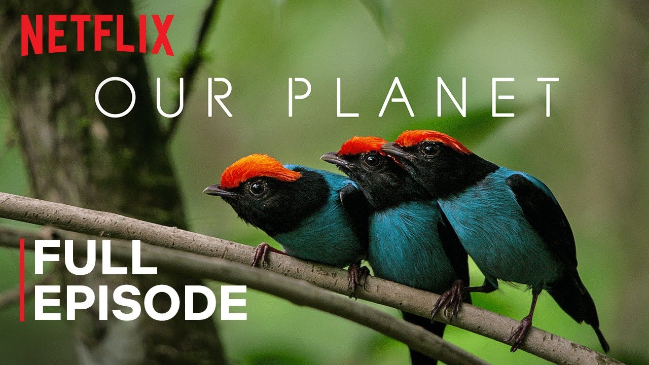 """One Planet"" – episode 1 from the series of documentaries ""Our Planet"""