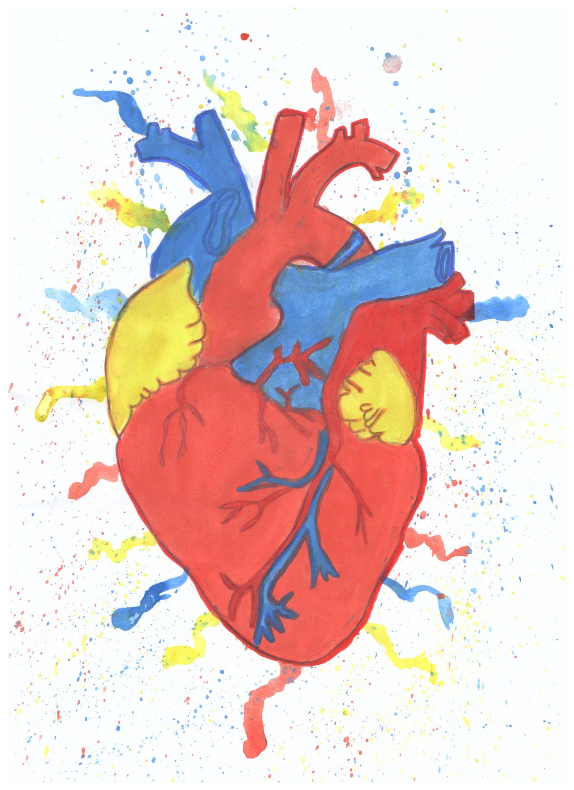 Sistemul circulator în cifre