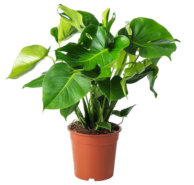 Rolul structurilor de bază la plante