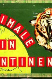 Animale de pe continente