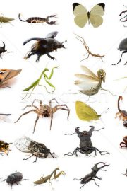 INSECTS – in english