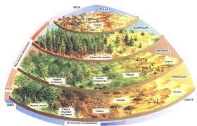 Investigarea ecosistemelor