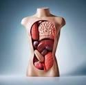 Organele corpului