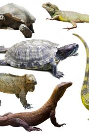 Reptiles quiz