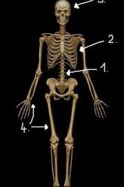 Sa ne cunoastem corpul!