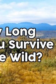 What would you do? Do you have what it takes to survive? Part III