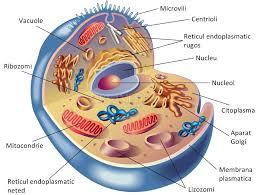 Celula – Test de citologie