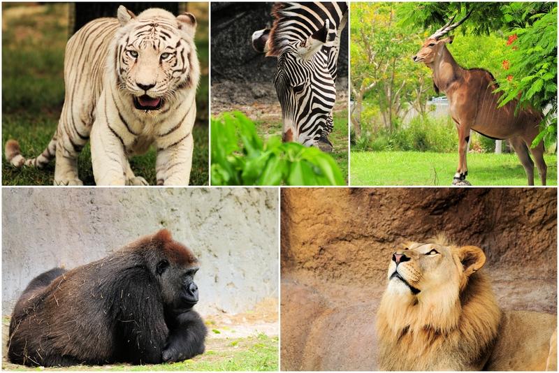 Curiozitati animale!!!!