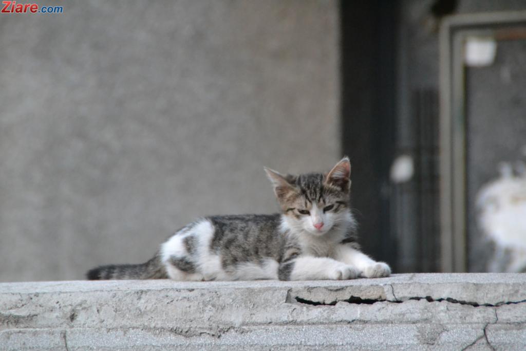 Am hrănit pisicuțe orfană de pe stradă.