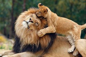 Matematică cu lei