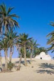 Prima mea enciclopedie – Deserturile -1