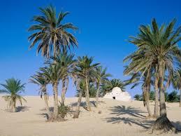 Prima mea enciclopedie- Deserturile -3