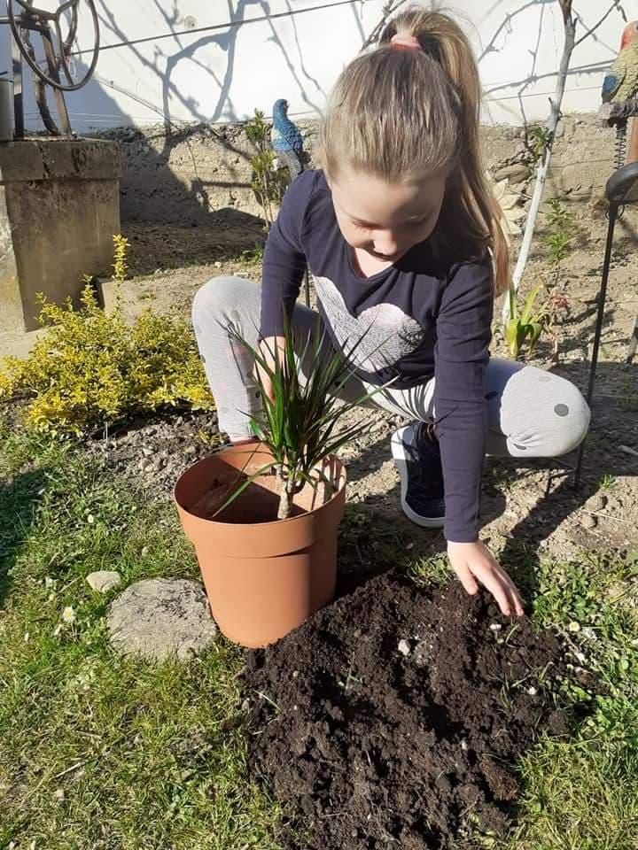 Am plantat o floare ambientală