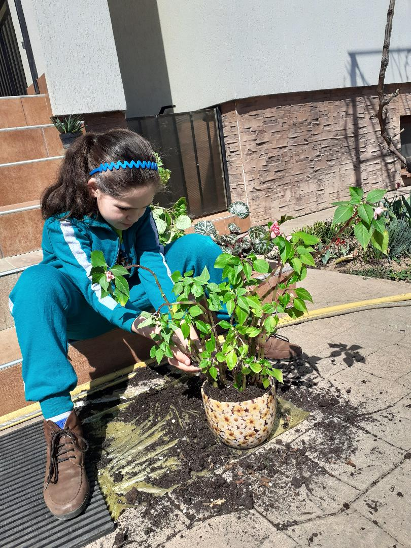 Sa plantam flori!