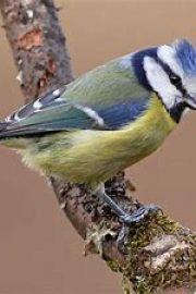 Păsările – [2]