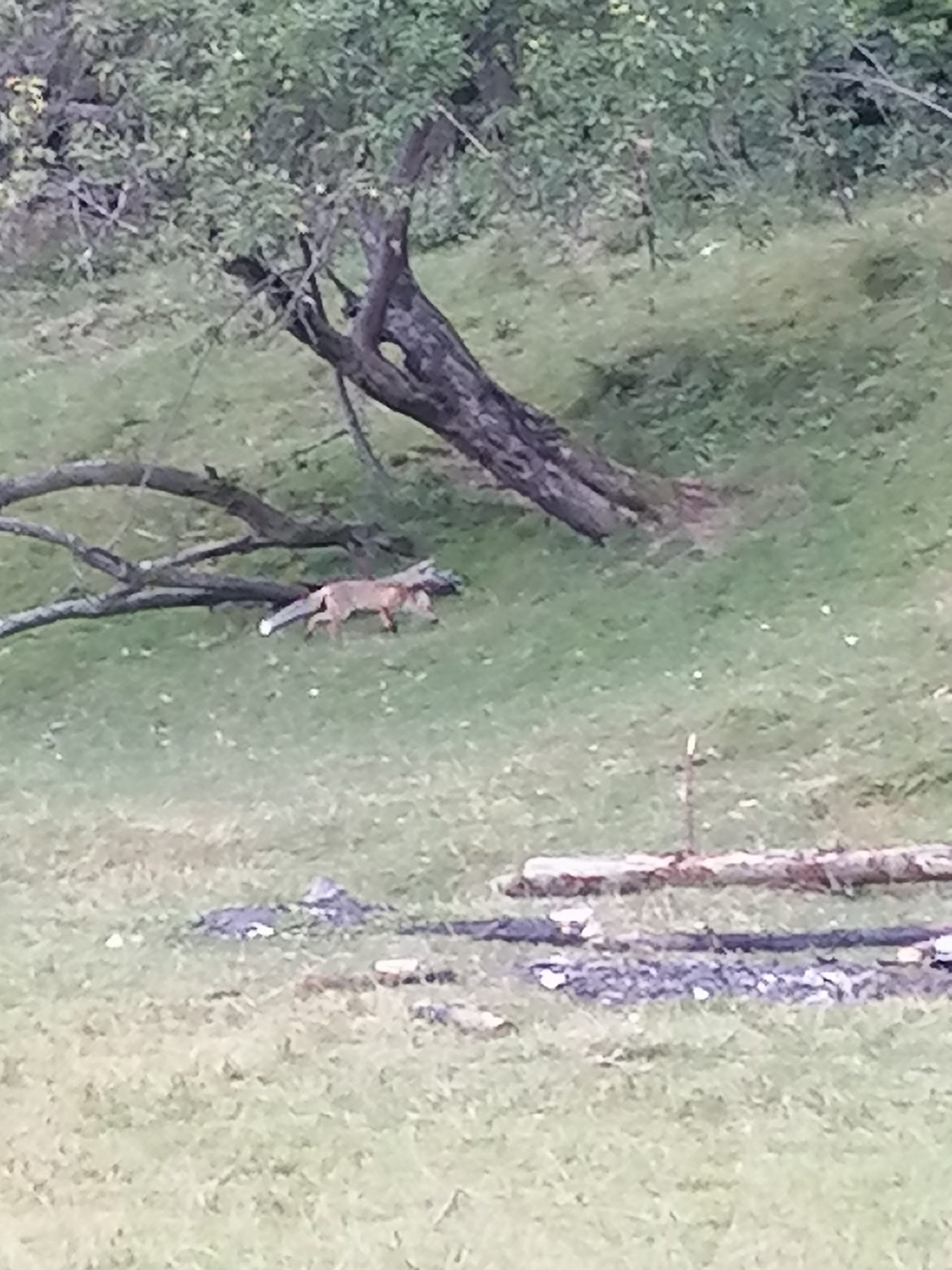 Am hrănit o vulpe – [2]