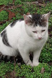 Despre pisici – [2]