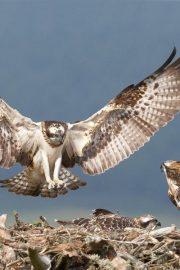 Păsări (habitate)