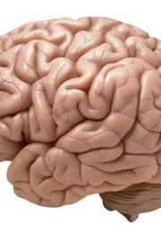 Test IQ – cât ești de atent?