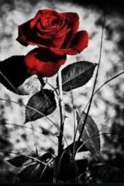 Colț alb, Jack London