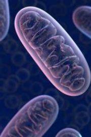 Originea vieții pe pământ (Abiogeneză)