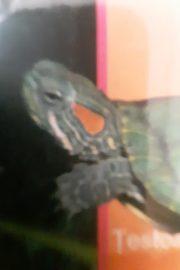 Reptile si amfibieni.