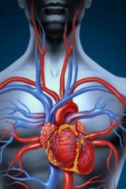 Sistemul circulator – [4]